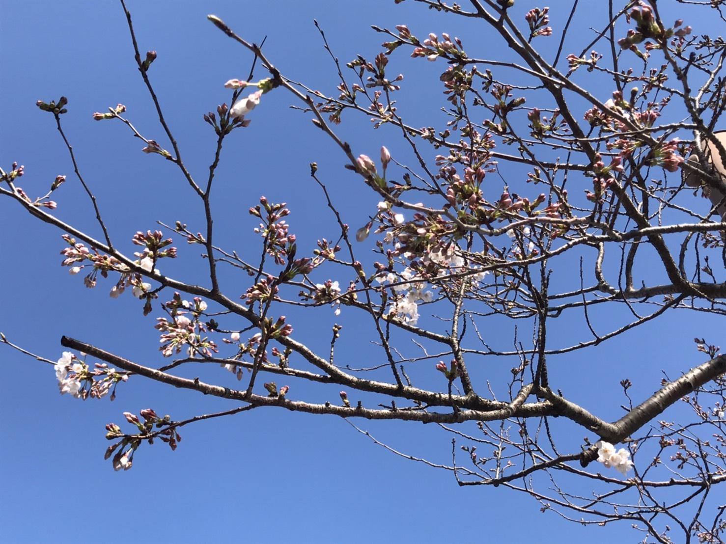 タイトルは、春が待ち通しい!
